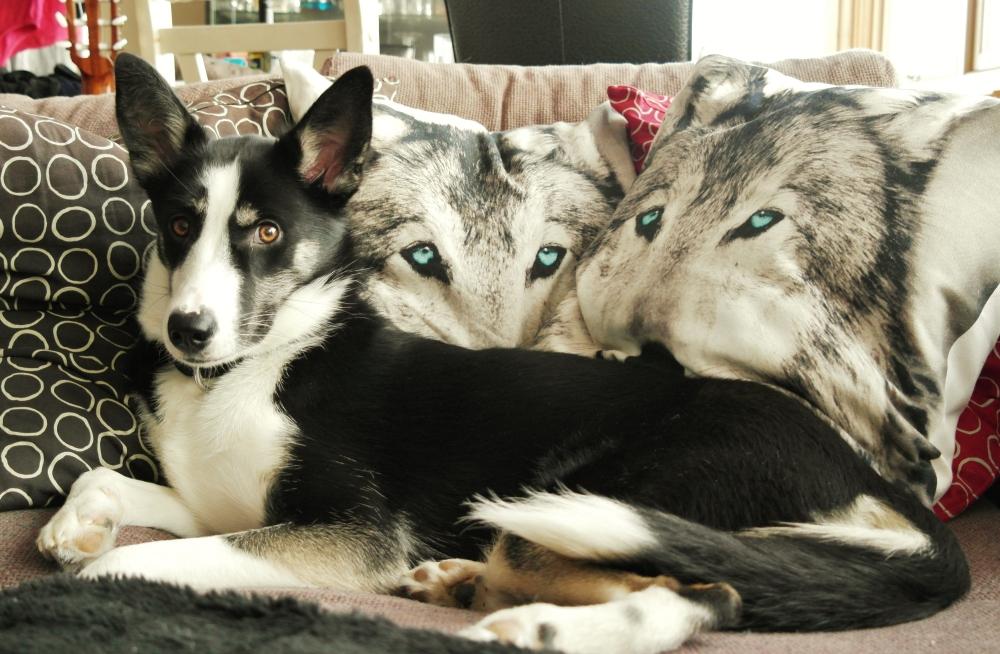 Kremmerhuset wolves